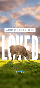 Should-Be-Loved-IPHONE-X-139x300 These 10 Free Vegan iPhone Wallpapers Will Inspire You